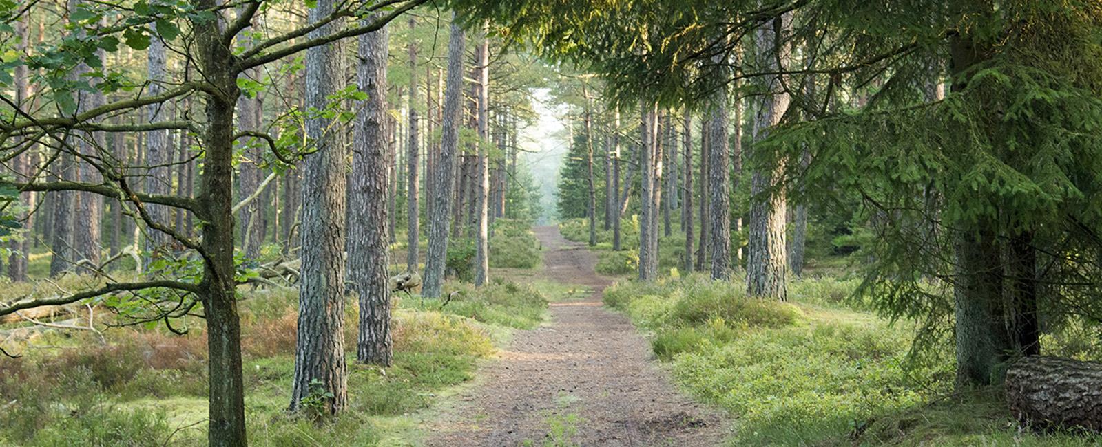 Natur, skovkasse, udeunger, naturoplevelser til børn i alle aldre, på opdagelse i naturen, skov