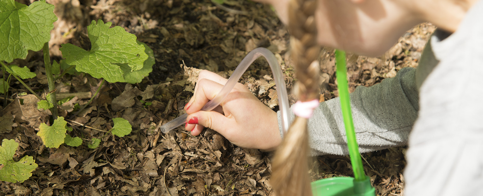 Natur, skovkasse, udeunger, naturoplevelser til børn i alle aldre, insektsuger