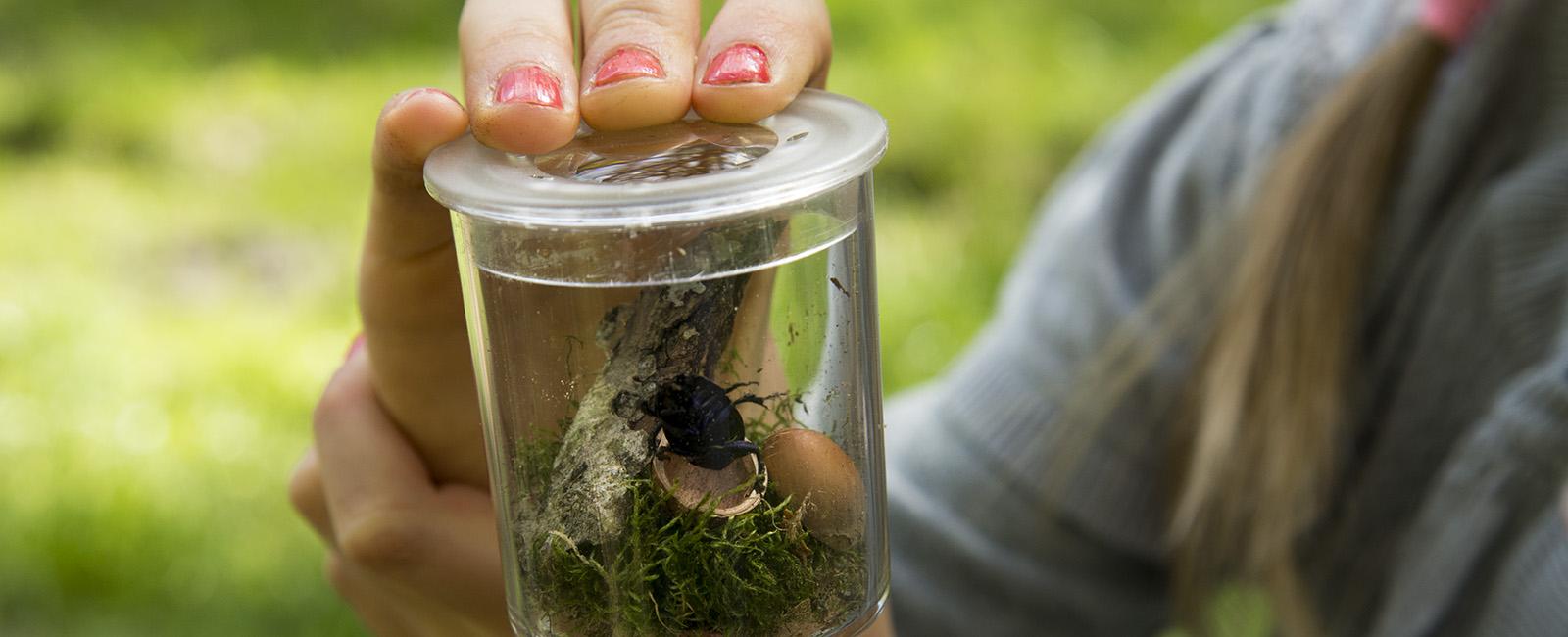 Natur, skovkasse, udeunger, naturoplevelser til børn i alle aldre